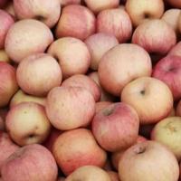 厂家直销红富士75mm果5斤箱装苹果 烟台红富士苹果一件代发