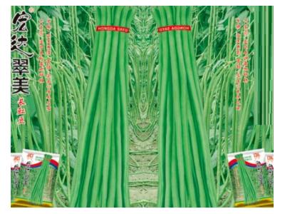 豇豆种子 翠美 200克入袋 翠绿色,高产稳产品种
