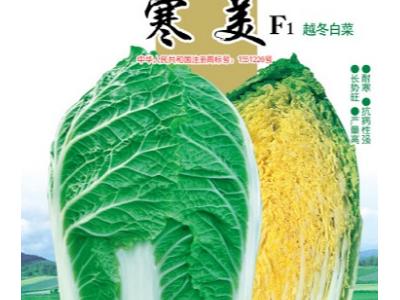 白菜种子 高产耐寒越冬黄心菜 寒美 10克入袋
