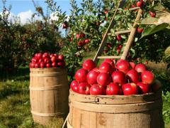 乡村产业振兴:小农生产引入现代农业发展,农民生活迈入新阶段