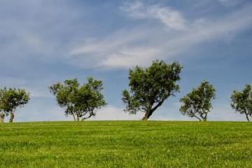 乡村振兴规划解读-补齐农村人居环境短板扎实推进美丽宜居乡村建设
