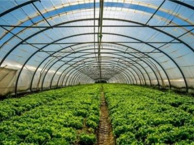 """耕种无忧""""农业生产设施保险"""