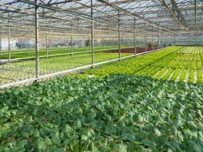 农业基地开发