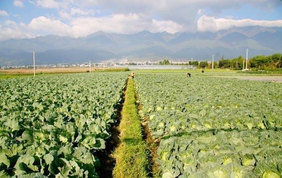 农业基地1