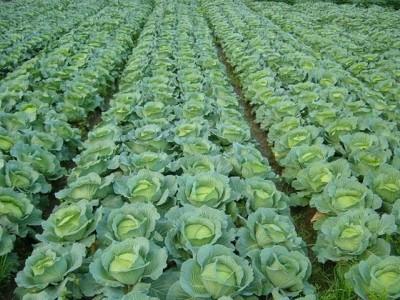 蔬菜种植、蛋鸡养殖