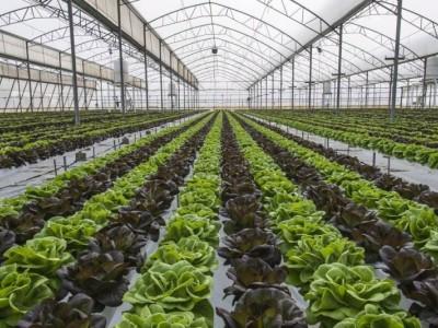 蔬菜、花卉种植销售