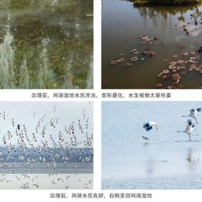 水污染治理生物净水