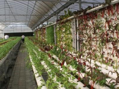 农业休闲观光服务