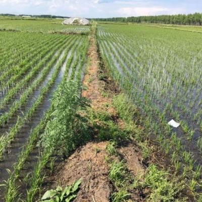 涵盖大量元素的专业肥料,专业种植