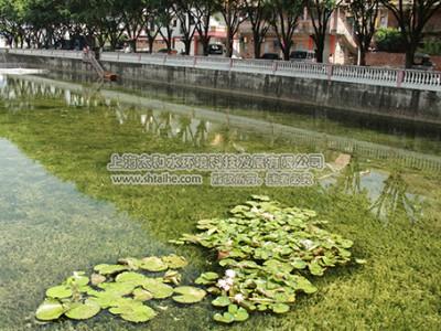 农村水环境
