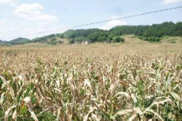 湘北、湘西北干旱缓解或基本解除 其他地方局部干旱仍维持