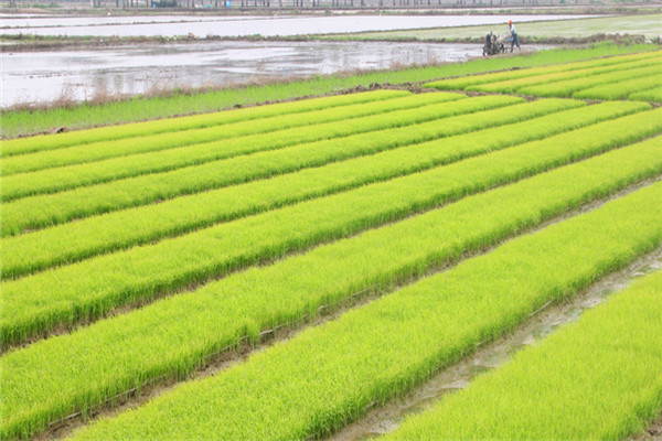 农业旅游扶贫12