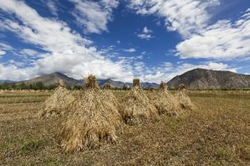 850万人返乡入乡创业创新 农村创业创新正当时