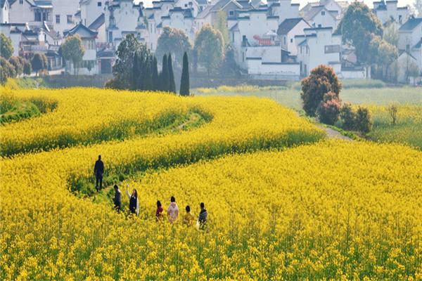 農業旅游扶貧27