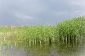 常见的水草有哪些种类?怎么养品质高?