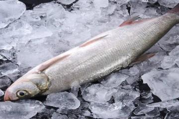 野生翘嘴鱼的价格一般是多少?常见翘嘴鱼的做法有哪些?