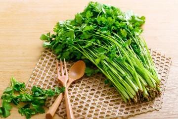 几月份最合适香菜的种植?香菜的种植要点有哪些?