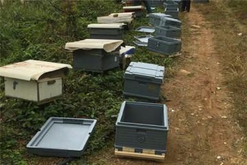 2020年蜜蜂的养殖与管理技术要点有哪些?