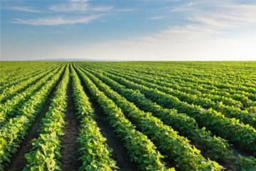 2020年大豆什么时候种合适?有哪些种植技术要点?