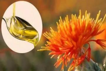 红花籽油多少钱一斤呢?其功效和禁忌都有哪些呢?