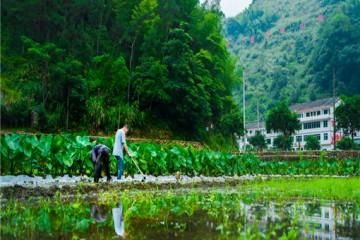 2020年返乡创业进行乡村旅游开发,有哪些扶持政策?