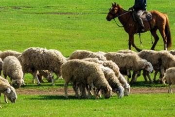 农民养羊现在能赚钱吗?大概利润是多少?