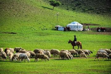 2020年养羊的前景怎么样?圈养100只羊一年的利润有多少?