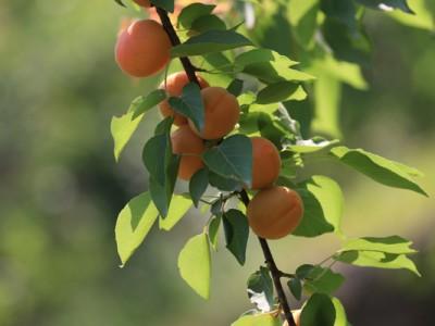 河南省鹤壁市无公害水果、初加工农产品