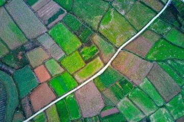 什么是永久基本农田?永久基本农田可以调整吗?