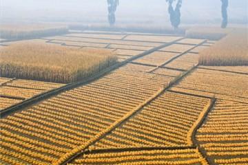 海南省出台新版《永久基本农田保护规定》,重点内容有哪些?