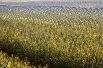 农村土地关系保持稳定不变,没有分到土地的农民怎么办?