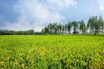 农村的土地纠纷有哪些?农村土地被占如何处理?