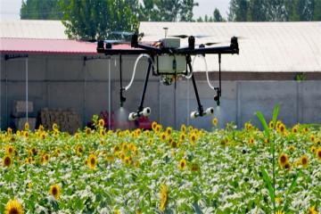 2020年农村创业国家会给哪些支持?特色农产品项目怎么样?