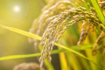 2020年农户种植粮食时,该怎么进行病虫疫情防控?