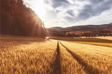 200亩以上种粮大户优惠政策主要包括哪些?