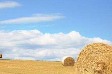 2020年加工什么农作物利润大?可以试试这几个项目!