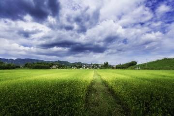 农村土地被征用的情况有哪些?赔偿的标准是怎么样的?