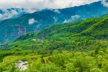 什么是集体林权制度改革?主要包括哪些内容?