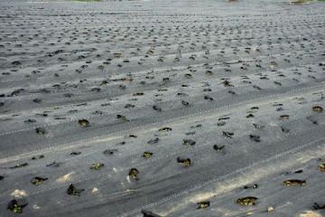 什么是除草地膜?除草地膜的用法和注意事项有哪些?