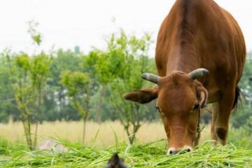 养殖场的粪便怎么处理比较好?有哪些可行方法?