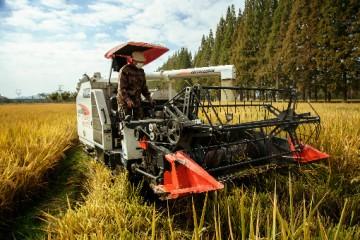 水稻收割机的价格是多少?水稻收割机应该怎么操作?