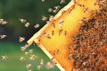蜜蜂养殖技术:6大养殖要点值得参考!