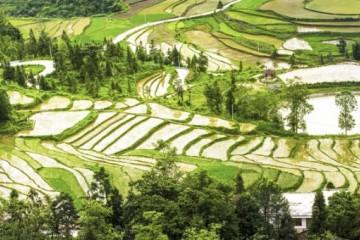 农村区域发展专业怎么样?有哪些职业发展?