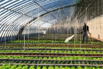 2020年大棚蔬菜种植技术要点有哪些?