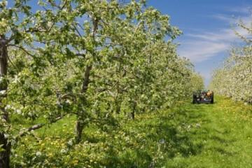 果树用什么肥料好?常见的施肥方式有哪些?