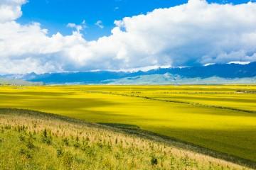 土地管理法都涉及哪些内容?土地管理法对农村土地有什么规定?