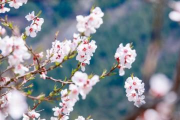 梨树常见的病虫害有哪些?梨树的病虫害怎么防治?