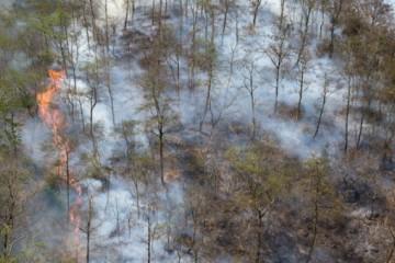 为什么会发生森林火灾?与这几点原因息息相关!
