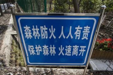 发生森林火灾事故,应该怎么做才能及时逃生?