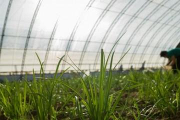 韭菜如何种植?2020年什么时候种最合适?